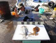 黒島の磯のヤエン釣りでアオリイカ良型2杯