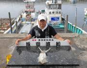 黒島の磯 ヤエンや泳がせ釣りでアオリイカあがっています