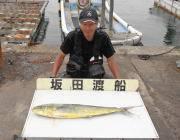 黒島の磯ペンシルでシイラ85cmの釣果