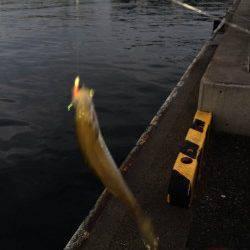 兵庫突堤でサビキ釣り〜タナは3.5ヒロぐらいで豆アジ