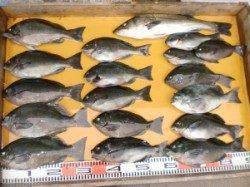 グレはどの磯も3~10枚の釣果 三尾の磯でフカセ