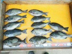 西肩にてカゴ釣り〜ヒラマサとマダイの釣果