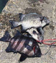 萩尾の磯 底物釣りでイシガキダイ&サンバソウ