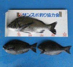 大丹生防波堤でチヌ44.3cmとグレ30cmオーバー2匹