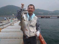 須磨海づり公園 シラサのウキ流し釣りでスズキサイズ