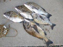 湯浅の磯 紀州釣りでマダイ&チヌ