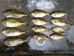湯浅の磯のフカセ釣りでグレ・アイゴ