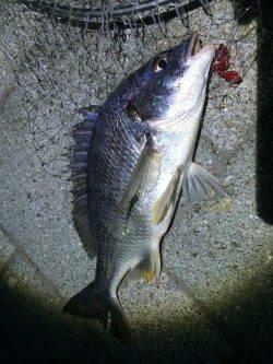 紀ノ川河口 初めてのポイントへのチニング釣行