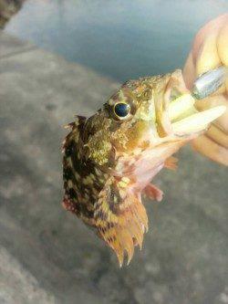 谷川漁港 夏イカ狙いは撃沈 穴釣りを楽しむ