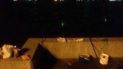 夏バテ対策に兵突で穴子釣り〜全部で18匹釣れました