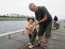 尼崎市立魚つり公園、落とし込みでチヌ 良型です