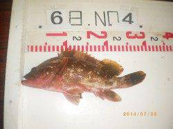 姫路市立遊漁センター 投げ釣りでアコウ30cmの他キス・アジなど