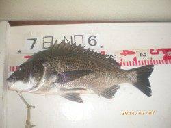 姫路市立遊漁センター イガイの落とし込みでチヌ46cm