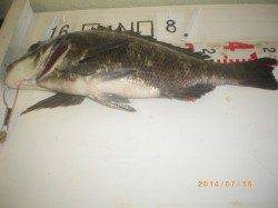 姫路市立遊漁センター イガイをエサに良型チヌの釣果