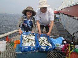 尼崎市立魚つり公園 サビキでアジ・サバ爆釣です