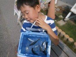 南港海釣り公園 サビキでアジ・サバ・サッパの釣果