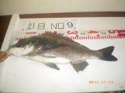 姫路市立遊漁センター イガイをエサにチヌ46cm