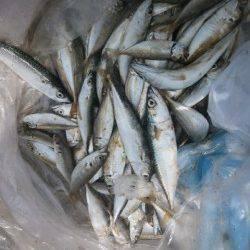 大阪南港魚つり園 サバ・アジのサビキ釣果報告