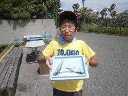 大阪南港魚つり園キッズのサビキ釣果〜サッパの割合が多いです