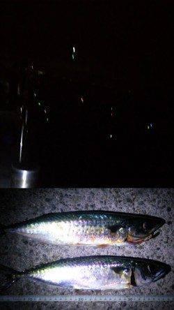 アジュール舞子 夜の大サバ釣りと日中のズボ&サビキ
