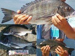 沼島釣行で多魚種満喫☆