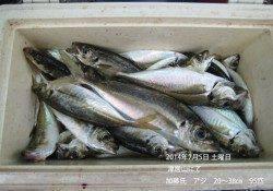 津居山でいいアジが釣れています!
