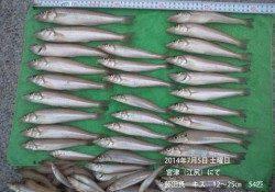 江尻にてキス大漁!★54匹★