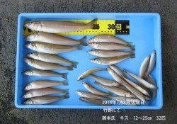 竹野でのキス釣り釣果 〜32匹〜
