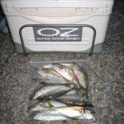 岩屋 深夜のアジング釣行でアジ〜22cm