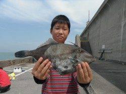 和歌山北港魚つり公園 ウマヅラハギ34㎝!