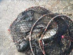 【15日】和歌山北港魚つり公園チヌ・グレ・アイゴなどの釣果