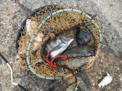 和歌山北港魚つり公園でチヌ・グレ・チャリコ