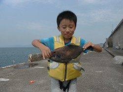 北港魚つり公園でファミリーフィッシング ウマヅラが良く釣れています