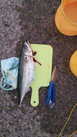 武庫川尻一文字 リベンジのサバ釣りで大サバゲット