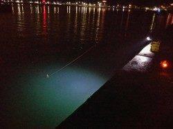 加太漁港 夜のサビキ釣りでアジ&サバの釣果