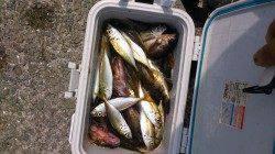 泉南方面で胴付&サビキ 魚種多様に釣れました♪