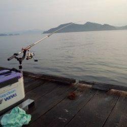 朝一の時合1時間で2ハイ! 三尾川の筏にてそろそろ終盤アオリイカ狙い
