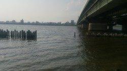 淀川河口 ルアーで狙うハゼゲーム