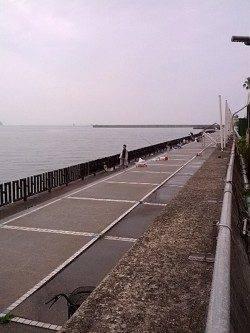 和歌山マリーナシティ サビキでアジ楽しめる 飲ませでヒラメ35cmも