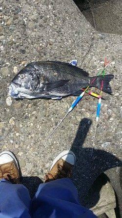 助松埠頭にてオキアミフカセ〜45.6cmのチヌがヒット!