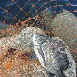 高砂埋立地でエビ撒き釣り 子チヌとセイゴ、他フカセ釣り