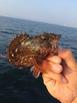 朝一渡船で神戸沖堤へ、ナブラもたっていて大鯖GET