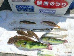明石港 昨日の残りゴカイで投げ釣り釣行