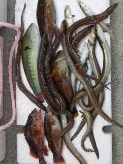 仮屋にて夜の投げ釣りでアナゴ、日中のキス狙いはベラメインでした