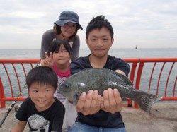 平磯海づり公園 記録賞のグレ33cm