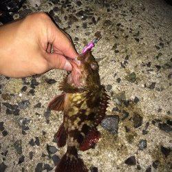江井ヶ島でメバリング〜表層中層反応なくボトムでガシラの釣果