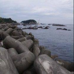 須原漁港内アジング、ボトムでGET! 磯場のガシリングでは数釣り♪