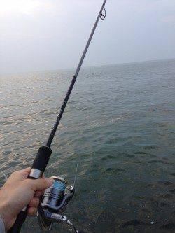 淡輪外向きテトラで小物釣り〜キス・ガッチョ