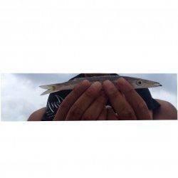 炬口でちょい投げキス狙い 他色々な魚種が釣れました