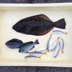 サビキでヒラメが釣れました!和歌山マリーナシティ